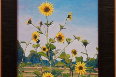 Sunflowers-Rail-Fence