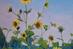 Sunflowers-in-Pasture